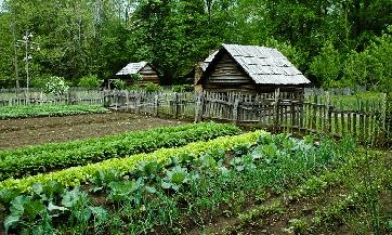 Hrana zagađena, rješenje organska proizvodnja