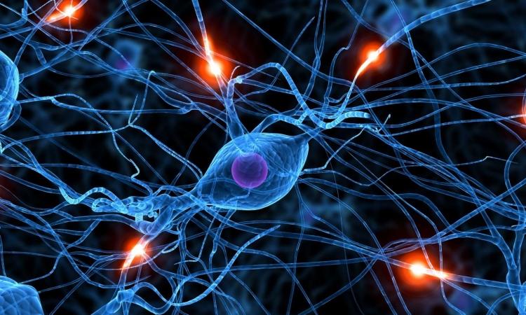 Kako mozak stvara navike
