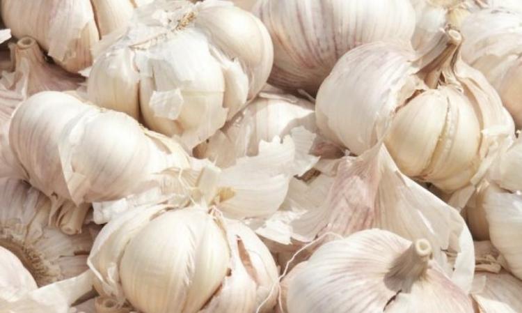 Bijeli luk - ljekovita biljka broj 1