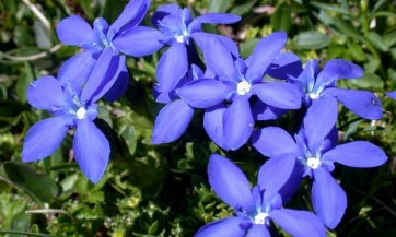 Spisak ljekovitih biljaka - dr Šulc