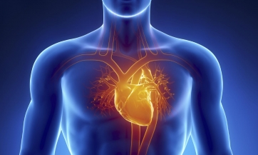 Kardiovaskularni sistem, Nikola Marković