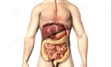 Liječenje organa za varenje i žučne kese na prirodan način, Nikola Marković