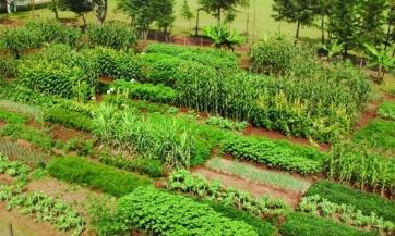 Šest savjeta za organsku baštu