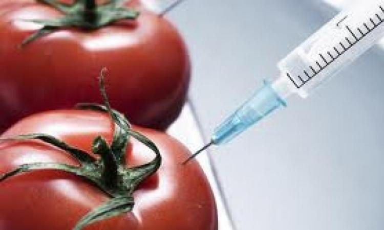 GMO sve više prouzrokuje bolesti