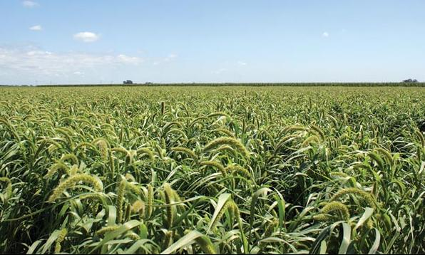 Budućnost hrane (Opasnosti GMO)