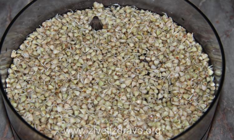 Potapanje žitarica, orašastih plodova, sjemenki, mahunarki: zašto i kako?