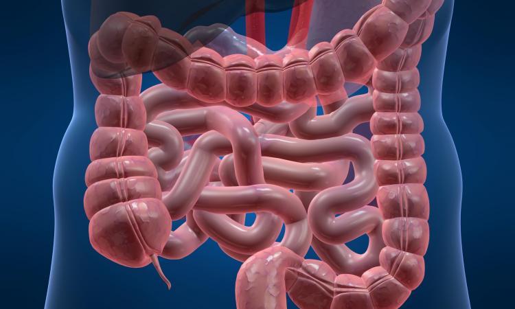 Idealan rad debelog crijeva - 2. do 4. pražnjenja dnevno