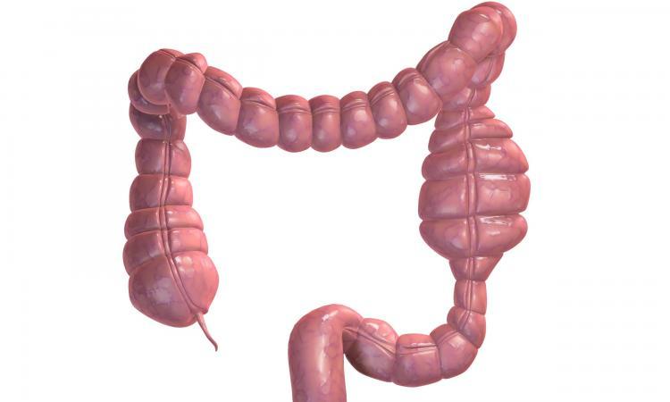 Prirodno pročišćavanje i liječenje debelog crijeva, Nikola Marković