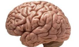 Šta koristi, a šta šteti mozgu