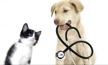 Liječenje drvenim ugljem u veterini