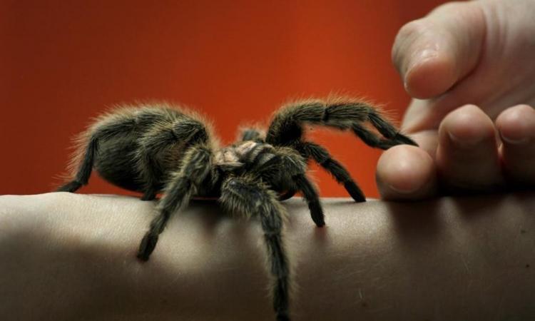 Liječenje ujeda pčela, osa, zmija, paukova drvenim ugljem