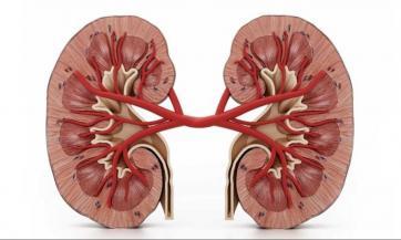 Kako liječiti bubrežne bolesti na prirodan način, Milan Ivović